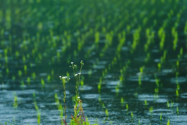 二十四節気「穀雨」
