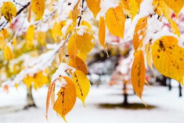 二十四節気「大雪」