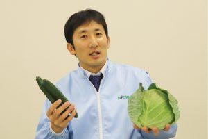 野菜のプロが守るシャキシャキなキャベツ